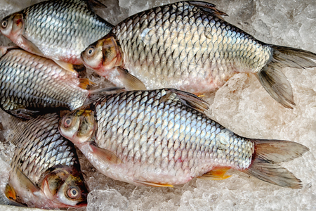 Freshwater fish put in ice for sale in the market. Stock Photo