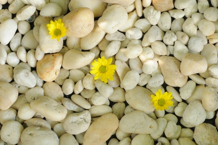 Stone background and flower