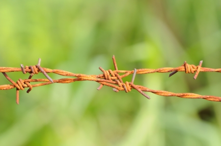 Barbed wire in green Stock Photo - 14946777