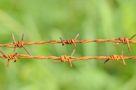 Barbed wire in green Stock Photo - 14946781