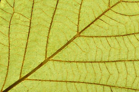 greeen: Greeen leaf texture