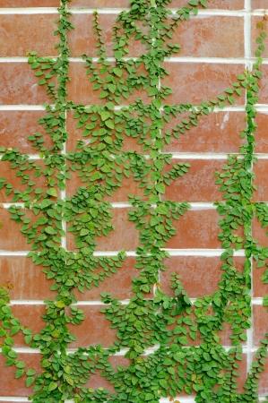 Leaf wall orange brick photo