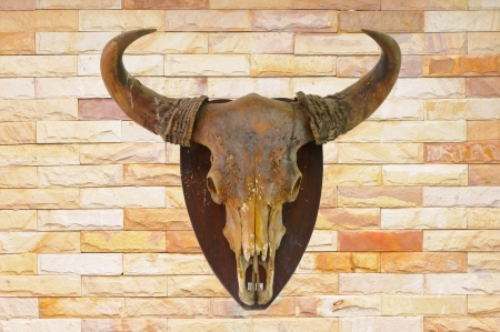 Cow skull on brick wall background photo