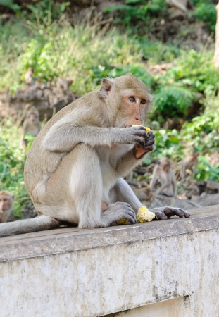 Monkey eating corn on wall photo