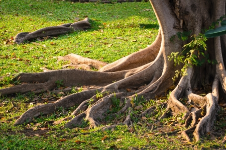 Tree root in the park