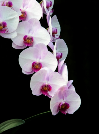 Beautiful Orchid flowers of thailand