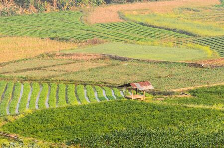 Vegetables plot in the countryside northern of Thailand