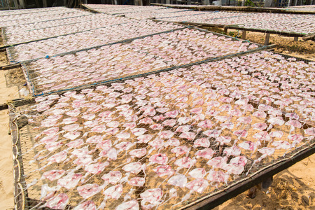 calmar: Sun dried squids in Pranburi District, Thailand