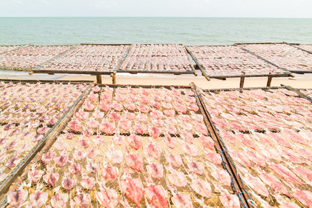 calmar: Sun dried squids in Pranburi District ,Prachuap Khiri Khan Province of Thailand