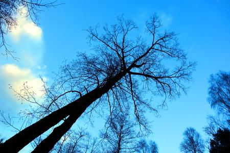 offshoot: Dark mysterious tree