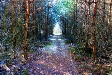 dense forest: way through dense forest