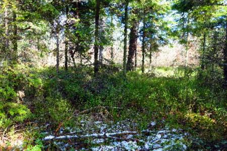 dense: dense forest landscape