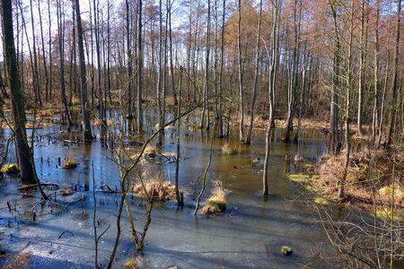 wetlands: wetlands landscape Stock Photo