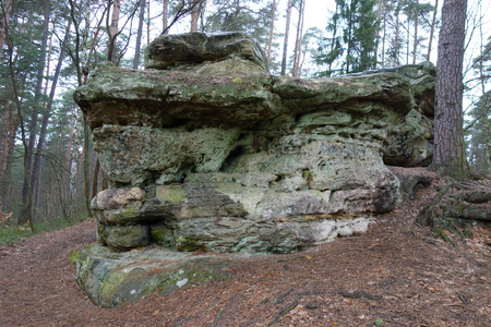 enormous: Enormous rock in a forest