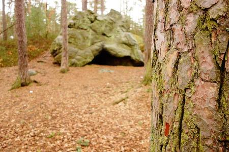 big cork: Pine Tree