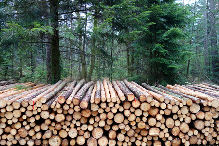 Tree logs stack