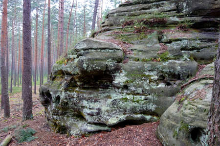 enormous: Enormous stone in a forest