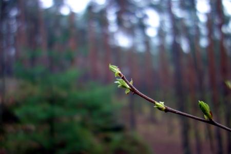 twig: Tree twig Stock Photo