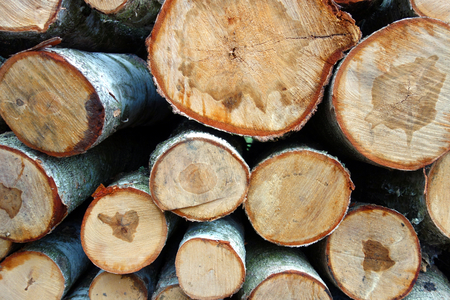 wood cut: Cut wood background Stock Photo