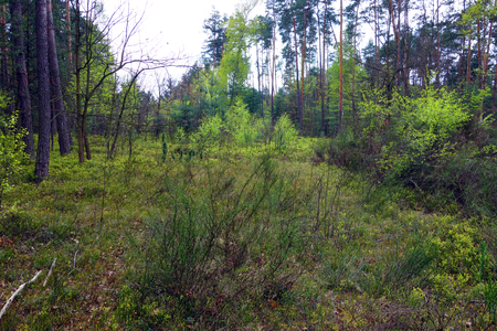 thicket: Forest thicket