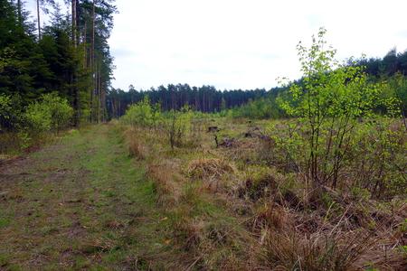 frenos: Los frenos salvajes en el claro del bosque