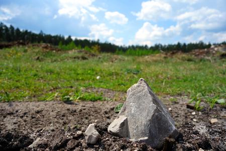 firmeza: superficie claro del bosque