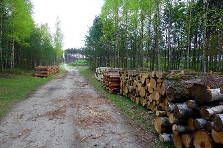 deforestacion: Cortar troncos de árboles por el camino de bosque. Deforestación. Foto de archivo