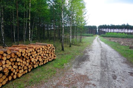 clearing the path: Forest path, logs and clearing