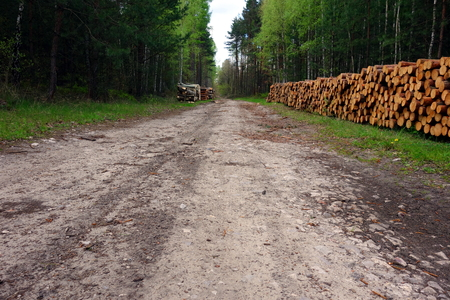 road surface: Forest road surface