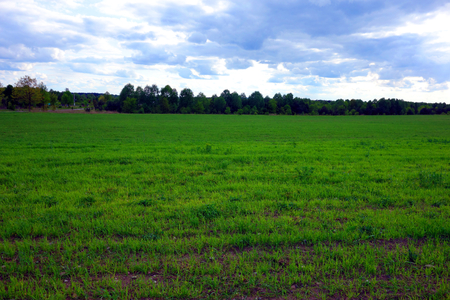 expanse: Saplings cultivation. Agricultural landscape.