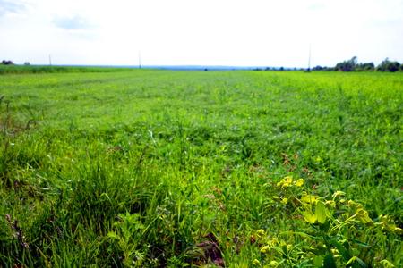 farmland: Green plants on farmland