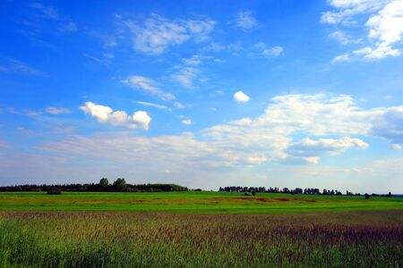 picturesque: Picturesque field landscape Stock Photo