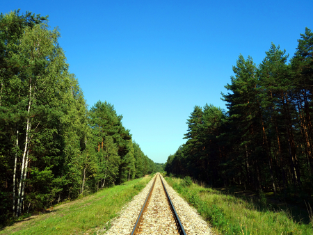 forest railroad: Railroad tracks in the forest. Good summer weather, blue, cloudless sky.