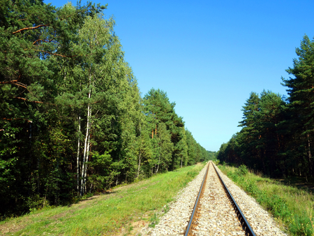 forest railway: Railway tracks in a forest Stock Photo