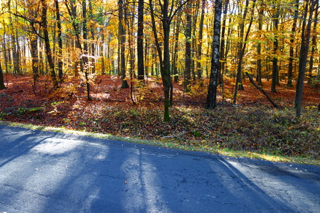 Colorful autumn forest on the roadside Stock Photo