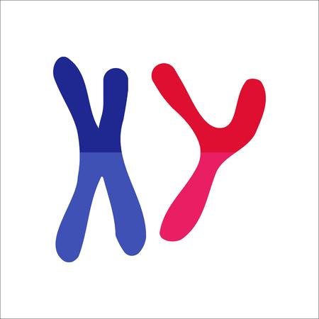 cromosoma: X y signo de grave cromosoma Y icono de símbolo en el fondo Vectores