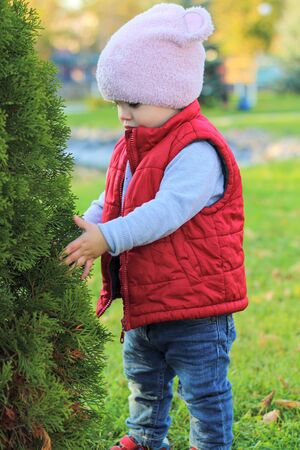 A small child in a fluffy pink hat and red vest hugs thuja in the autumn park. Beautiful fall sunny day outdoors. 写真素材 - 133549918
