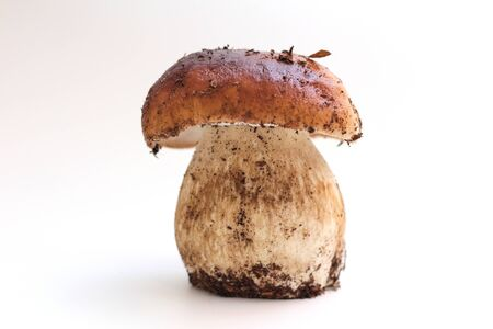 One dirty, unpeeled standing on tube Boletus edulis mushroom isolated on a white background. 写真素材 - 133551480