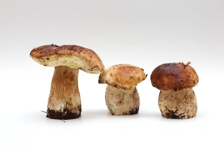 Three dirty, unpeeled standing on tube penny bun mushroom isolated on a white background. 写真素材 - 133551583