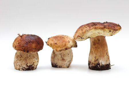 Three dirty, unpeeled standing on tube Boletus edulis mushroom isolated on a white background.
