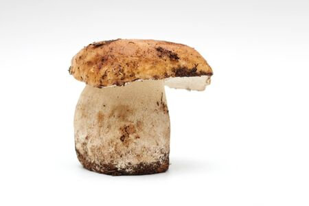 One dirty, unpeeled standing on tube Boletus edulis mushroom isolated on a white background.