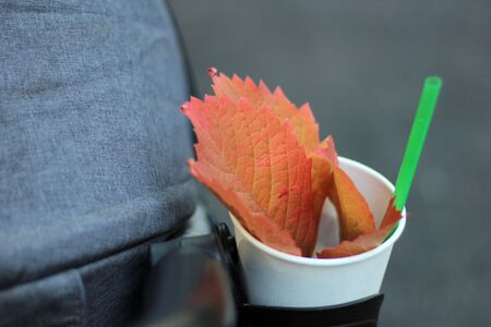 Red orange leaves of Parthenocissus quinquefolia in a cup with a straw. Fall Virginia creeper. 写真素材