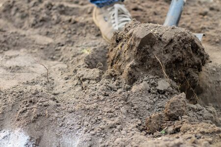 A man in blue jeans and laced moccasins digs the ground with a shovel. Preparing a garden for spring planting vegetables