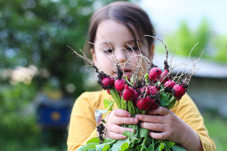A little girl holds an armful of freshly harvested radishes in her hands.