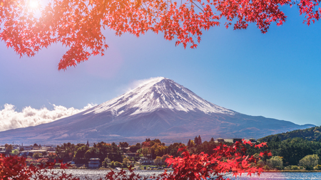 Colorful Autumn in Mount Fuji, Japan - Lake Kawaguchiko is one of the best places in Japan to enjoy Mount Fuji scenery of maple leaves changing color giving image of those leaves framing Mount Fuji.