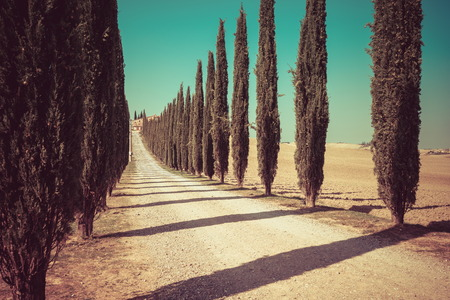 Vintage filter - Tuscany landscape of cypress trees row along side road in countryside of Italy. Cypress trees define the signature of Tuscany known by many tourists visiting Italy. Stock Photo