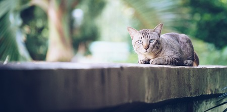 Cat on the house wall. Grey striped cat looking at camera.