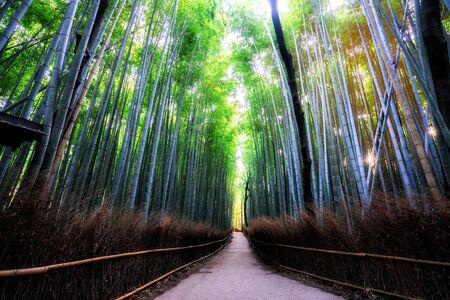 Słynne miejsce Arashiyama Bamboo Forest w Kioto w Japonii. - Gaj Bambusowy Arashiyama jest jednym z najważniejszych miejsc turystycznych w Kioto, jeśli chodzi o podróże turystyczne do Kioto i Kansai w Japonii. Zdjęcie Seryjne