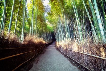 Arashiyama Bambuswald berühmter Ort in Kyoto Japan. - Der Bambushain Arashiyama ist eine von Kyotos Top-Sehenswürdigkeiten für Touristenreisen nach Kyoto und Kansai, Japan.