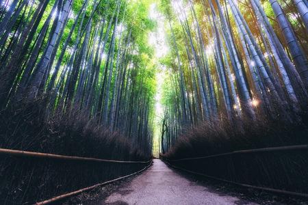 Lugar famoso del bosque de bambú de Arashiyama en Kyoto Japón. - El Arashiyama Bamboo Grove es uno de los principales lugares de interés turístico de Kioto para viajes turísticos a Kioto y Kansai, Japón.